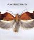 THE GANZFELD 03
