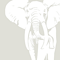 THE WHITE ELEPHANT ALBUM